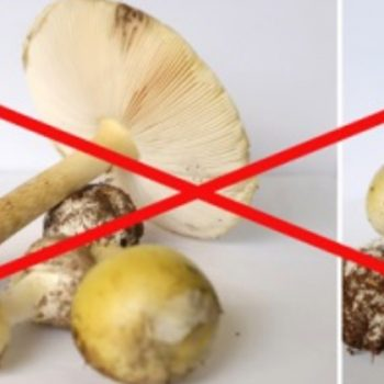 Bild von Pilzen
